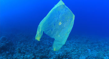 Biodegradable bag in the ocean