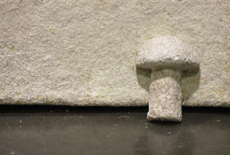 A mushroom made from mushroom packaging