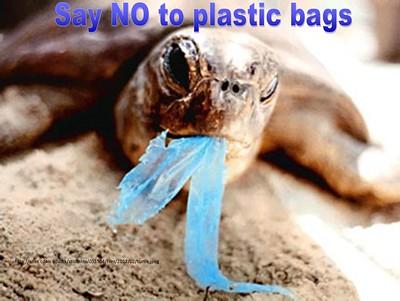 Turtle eating plastic