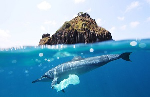 Plastic bag attached to a dolphin